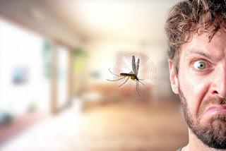 Mengatasi Serangga Masuk Ke Telinga - Hikmah Pelajaran