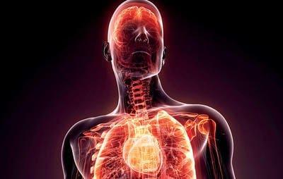 Kerangka Otot Tubuh Manusia