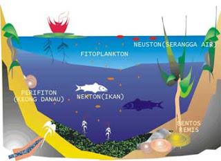 Komponen Ekosistem Biotik dan Antibiotik