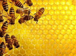 Manfaat madu untuk kecantikan, Khasiat madu lebah, Pengobatan khasiat madu untuk kesehatan, Manfaat madu untuk anak, Pengertian madu, Khasiat madu asli untuk pria, Cara mengkonsumsi madu, Manfaat madu untuk bibir,