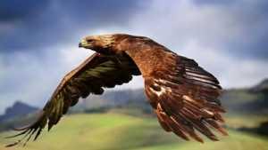 Gambar Raja Wali Terbang