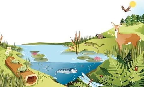 Contoh Ekosistem Buatan Dan Alami