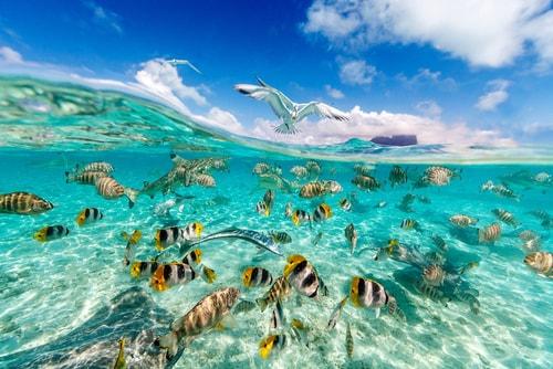 Contoh Ekosistem Buatan Dan Alami Jagad Id