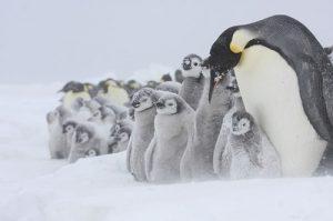 Ekosistem kutub tundra