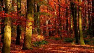Hutan gugur