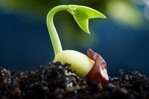 Macam Macam Sumber Daya Alam dan Manfaatnya