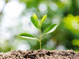 Jenis Jenis Tanah, Ciri Ciri, Fungsi dan Manfaatnya