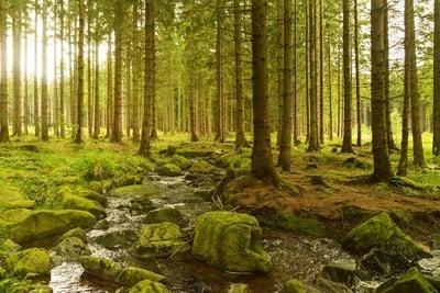 Pengertian Hutan : Fungsi, Manfaat Dan Macam Jenis