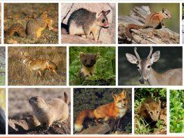 Pengertian Mamalia : Klasifikasi dan Contoh Kumpulan Hewan Mamalia