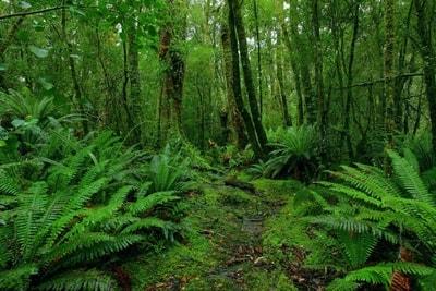 Pengertian Herbivora : Hewan Herbivora, Ciri Ciri Dan Contoh Gambar