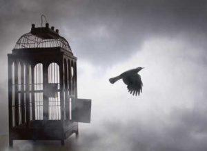 Burung Lepas Dari Kandang