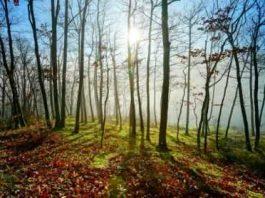contoh puisi tentang keindahan alam 2 bait