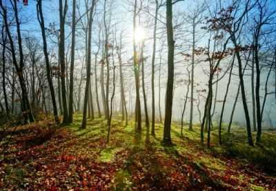 Contoh Puisi Tentang Keindahan Alam 2 Bait Jagad Id