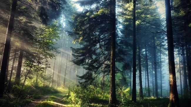 puisi tentang hutan