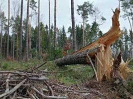 puisi tentang kerusakan alam