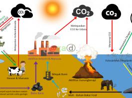 Gambar Siklus Karbon HD Lengkap Dengan Keterangan dan Penjelasan