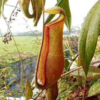 Contoh Jenis Flora Dan Fauna Di Indonesia Yang Langka Jagad Id