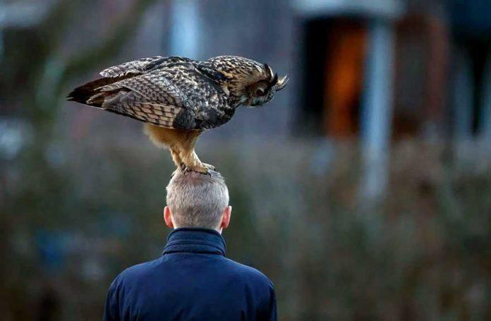 Burung Hantu Peliharaan