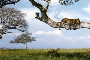 Habitat : Pengertian, Fungsi dan Macam Jenis