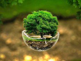 Keindahan Alam - Pohon Hijau Indah