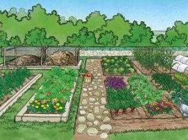 Kebun - Buah dan Sayur
