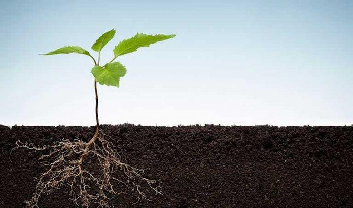 Ciri Ciri Tumbuhan Monokotil dan Dikotil - Pengertian Pohon
