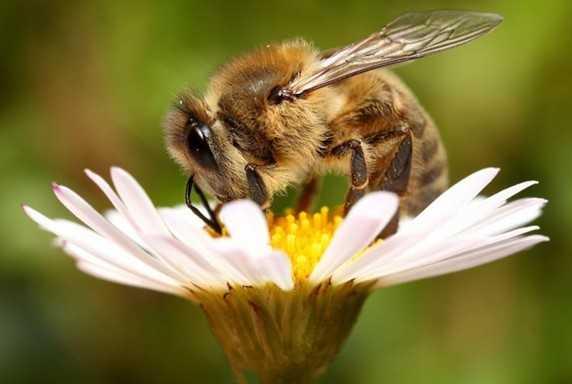 Contoh Gambar Simbiosis Mutualisme Lebah dan Bunga