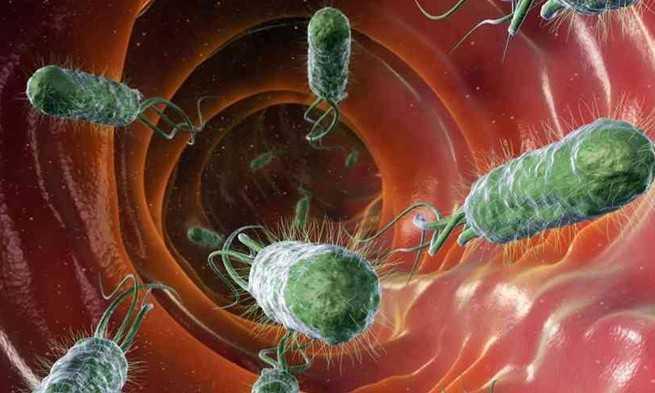 Contoh Gambar Simbiosis Mutualisme Manusia dan Bakteri