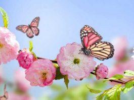 Simbiosis Mutualisme Kupu kupu dan Lebah Dengan Bunga