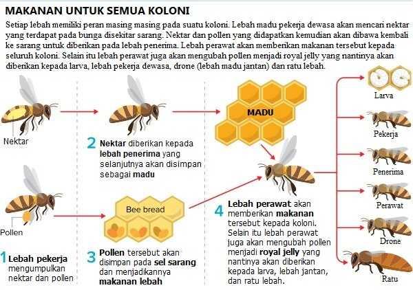 Lebah - proses perubahan nektar menjadi madu
