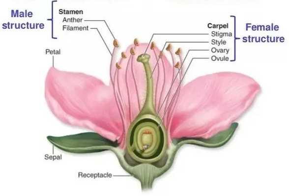 Nama Bagian Bagian Bunga - Anatomi Lengkap