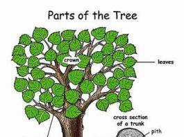 Pengertian Pohon Adalah - Arti, Bagian, Faktor Pertumbuhan dan Manfaat