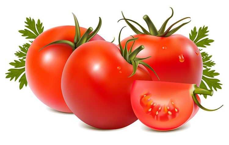 Gambar 4-Di bagian atas buah tomat terdapat tangkai berwarna hijau