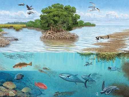 Pengertian Ekosistem Adalah Arti, Komponen, Jenis, Contoh Dan Ketergantungan