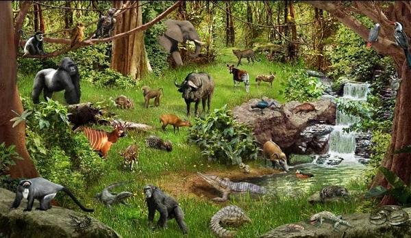 Ekosistem Hutan Pengertian, Manfaat, Komponen, Macam Jenis dan Contoh