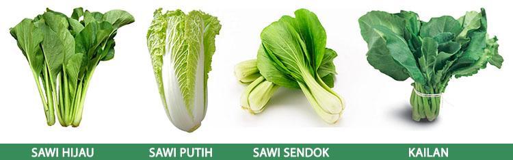 Gambar 2. Perbedaan sawi hijau, sawi putih, sawi sendok, dan kailan.