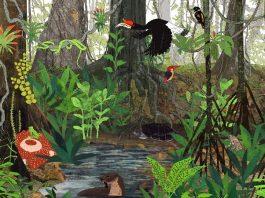 Bioma Hutan Hujan Adalah Definisi Arti, Contoh, Gambar, Pengertian, Ciri, Iklim, Macam Jenis, Flora dan Fauna
