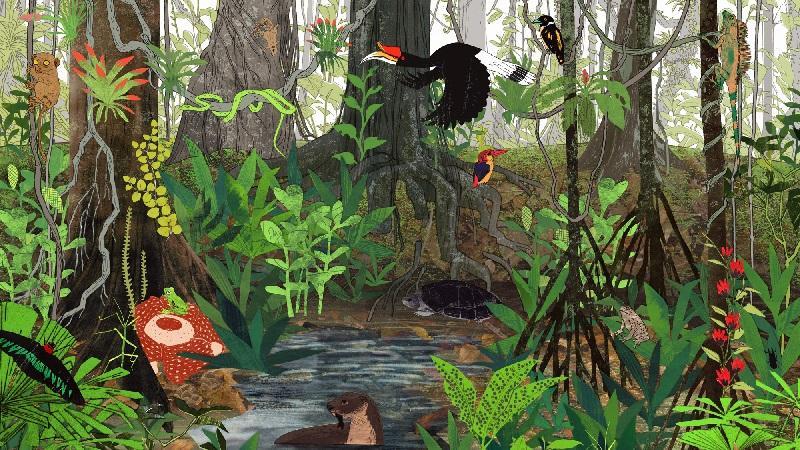 Bioma Hutan Hujan Tropis Manfaat Ciri Macam Jenis Flora Dan Fauna Jagad Id