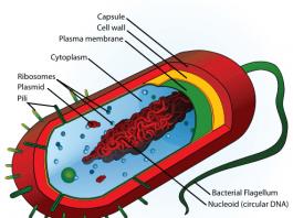 Pengertian Bakteri Adalah Definisi Arti Ciri Ciri Contoh Gambar Karakteristik Sejarah, Macam Reproduksi dan Struktur Bagian