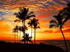 Pengertian Iklim Tropis Adalah Definisi Ciri Ciri Manfaat Fungsi Contoh Karakteristik, Flora-Fauna dan Wilayah Persebaran
