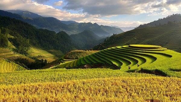 Pengertian Pertanian Adalah Definisi Usaha Fungsi Manfaat, Macam Jenis dan Contoh