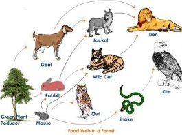 Rantai Makanan Hutan Adalah Definisi Fauna Komponen, Manfaat, dan Contoh Gambar