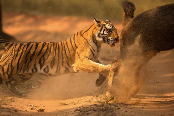 Contoh Gambar Foto Wildlife Photography Galeri