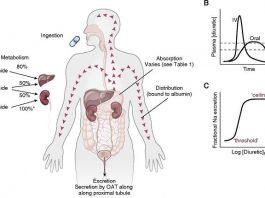 Pengertian Farmakokinetik Adalah Definisi Arti Sistem Tahapan Urutan Skema, Proses dan Contoh Manfaat