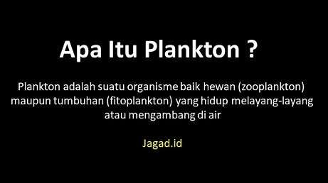 Pengertian Plankton Adalah Definisi Arti Macam Jenis, Sumber Makanan, Peran, Pengelompokan dan Contoh