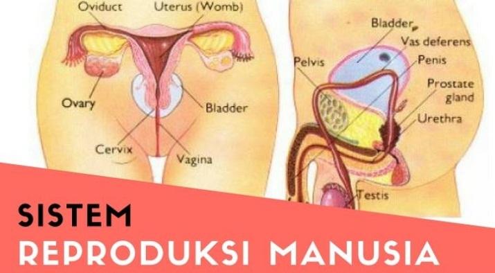 Macam Penyakit yang Dapat Terjadi Pada Sistem Reproduksi