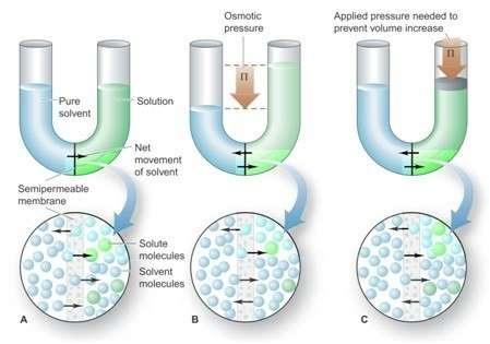 4 Tekanan Osmosis