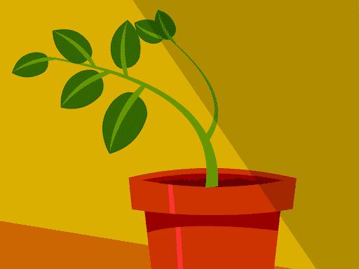 Gerak Pada Tumbuhan Adalah Definisi Pengertian, Macam Jenis dan Contoh