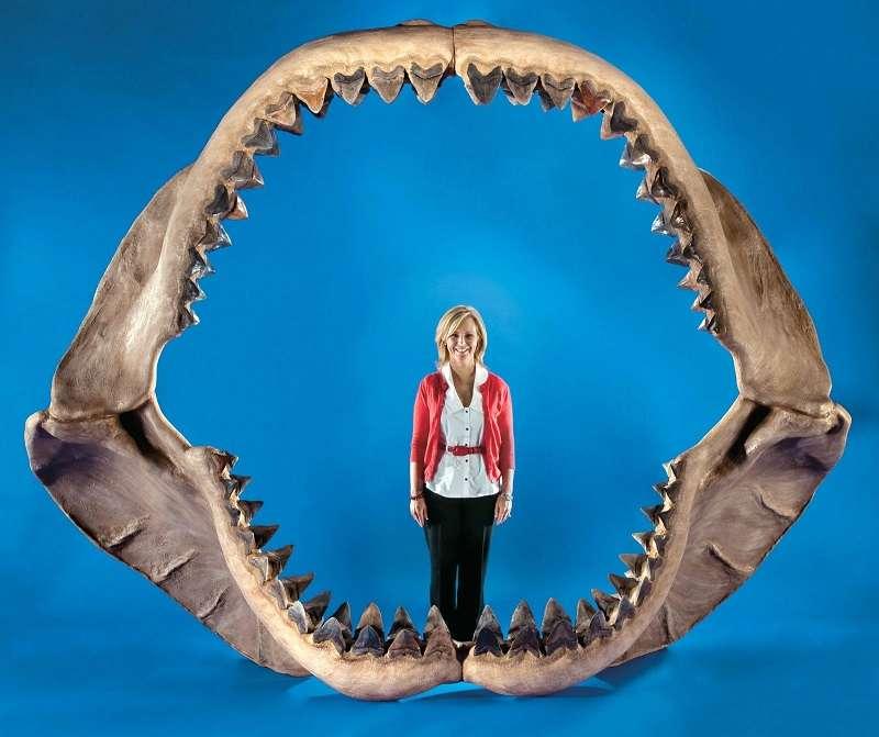3 Gigi dan Kekuatan Gigitan Hiu Megalodon